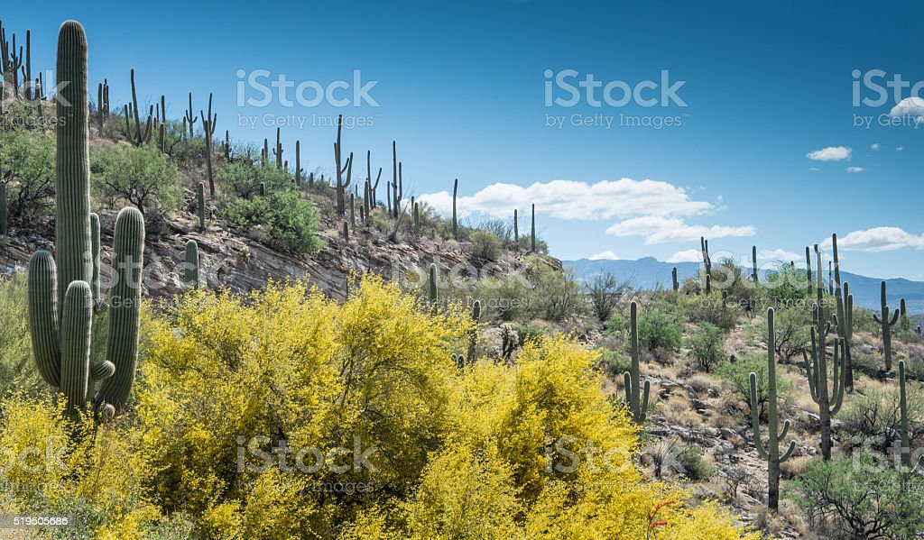 Blooming desert stock photo