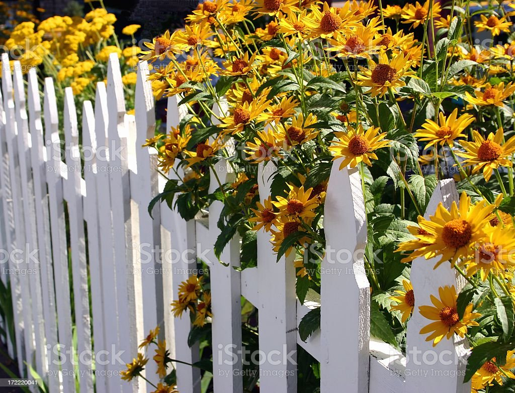 Blooming Fence of Flowers royalty-free stock photo