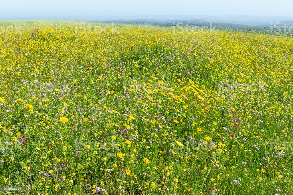 Blooming field spring day stock photo