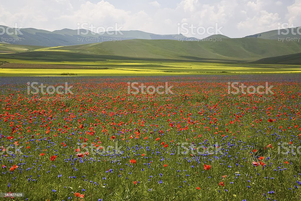 Blooming fields in the Sibillini mountains royalty-free stock photo