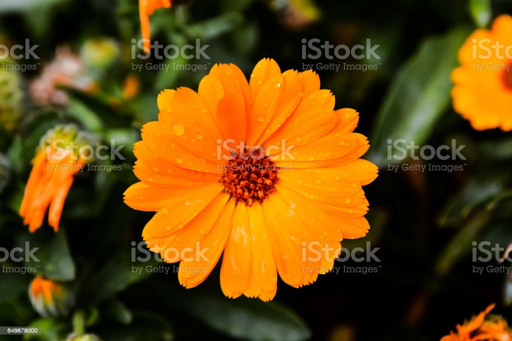 Blooming Flower Background stock photo