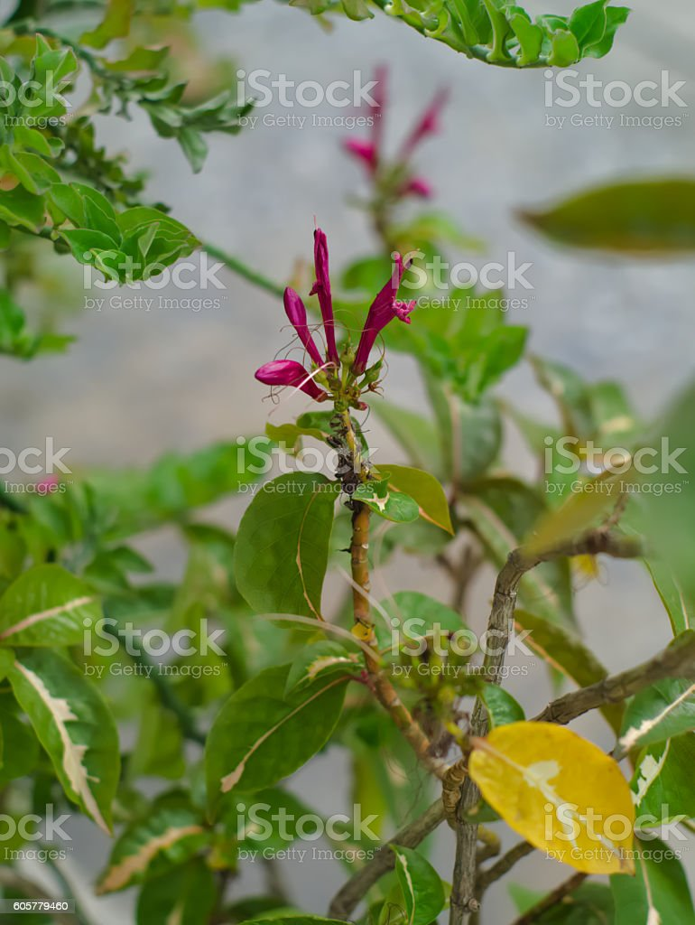 blooming flower of caricature plant stock photo