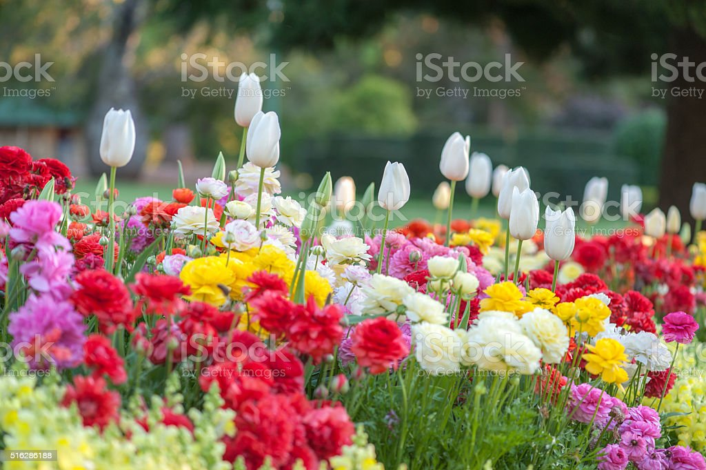 Blooming flower stock photo
