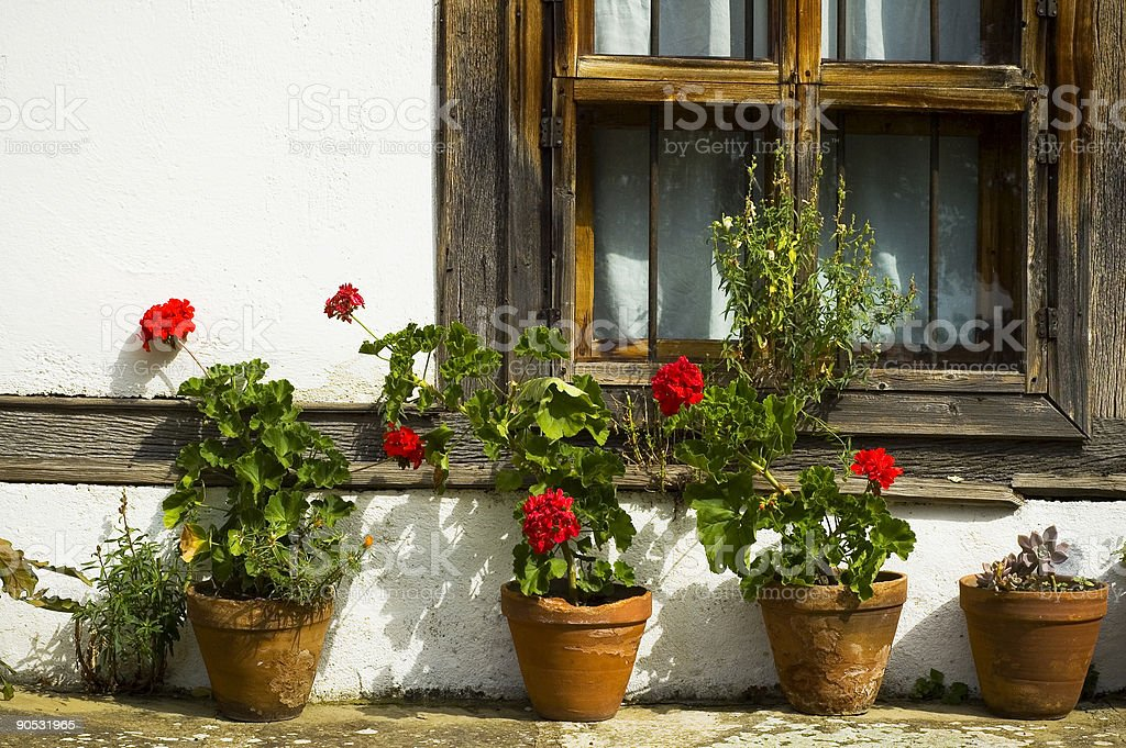 blooming flowerbox at window royalty-free stock photo