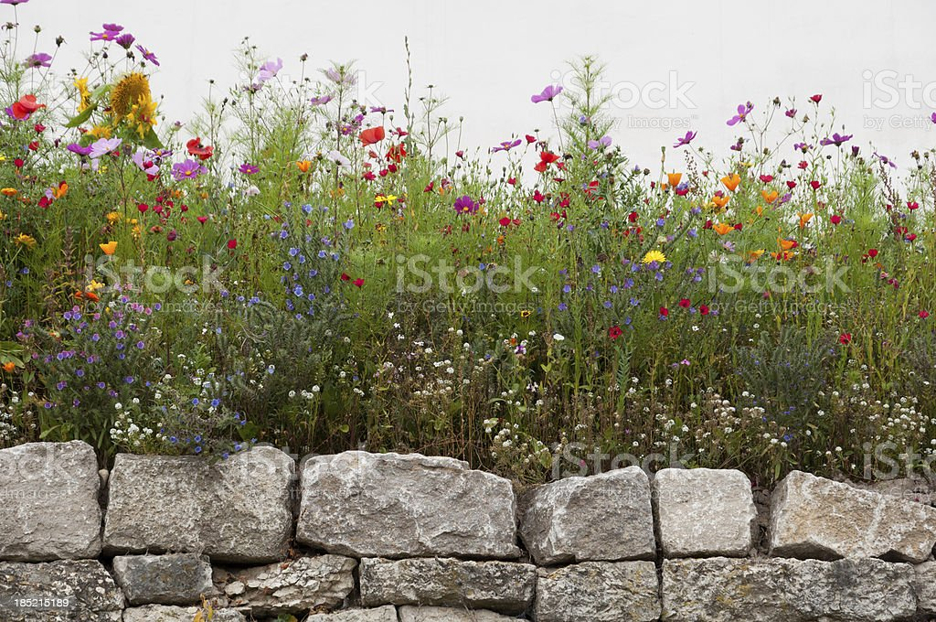 Blooming flowers between white wall and masonry of limestone stock photo