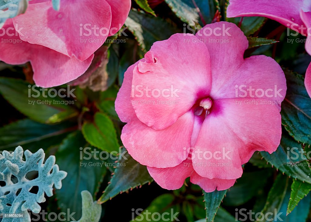 blooming flowers closeup stock photo