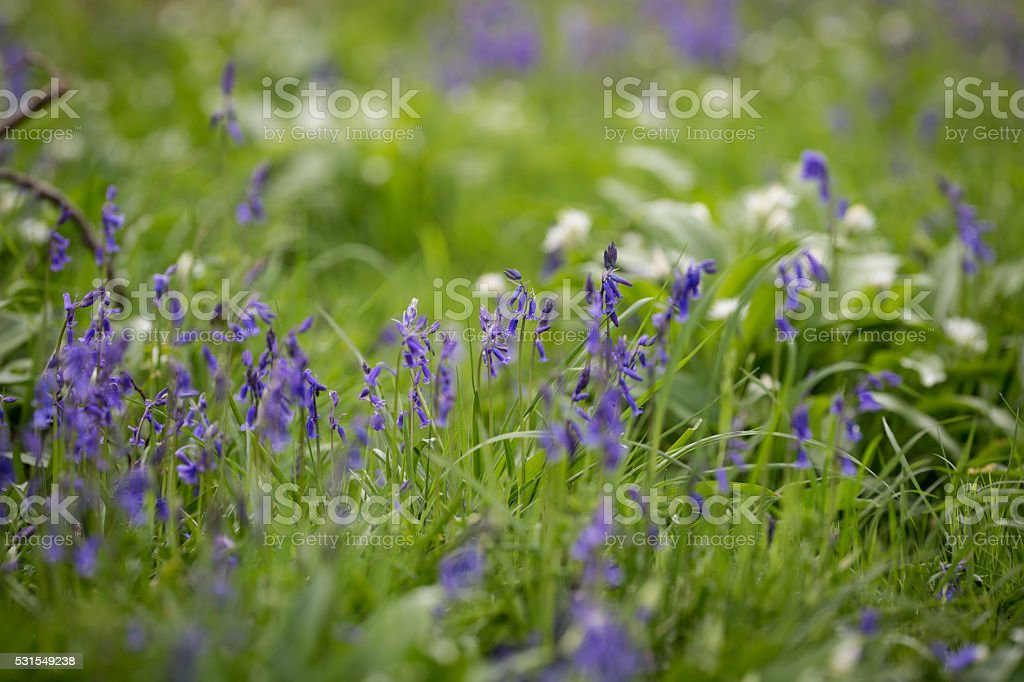 Blooming flowers in the meadow stock photo