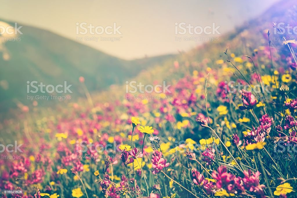 Blooming Flowers Spring Summer seasons natural Background stock photo