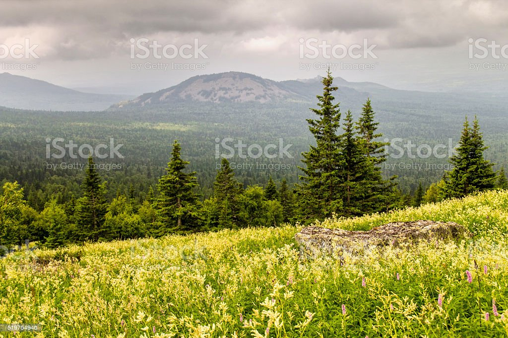 Blooming forest meadow stock photo