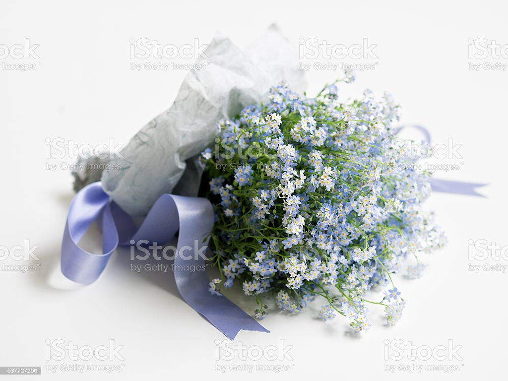 Blooming forget-me-nots royalty-free stock photo