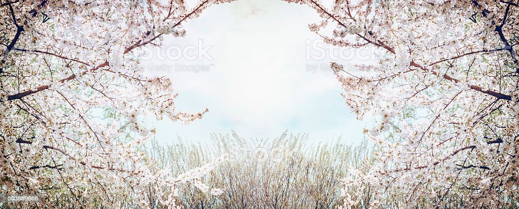 Blooming fruit trees over spring nature background, banner stock photo