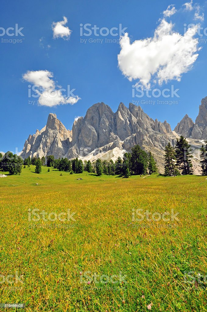 Blooming grass field stock photo