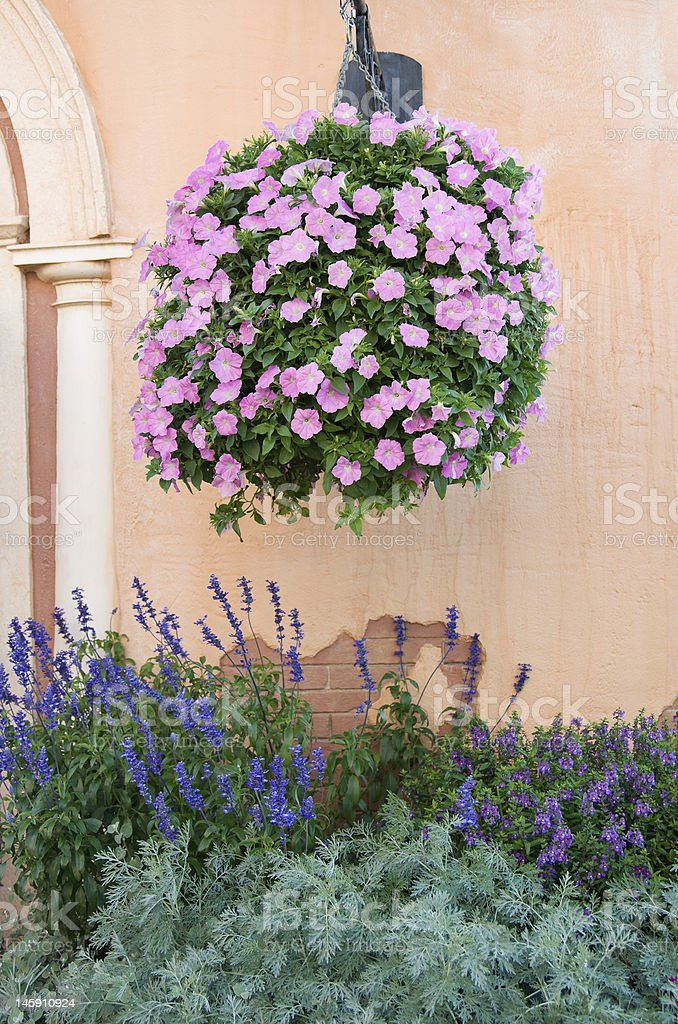 Blooming Hanging Basket royalty-free stock photo