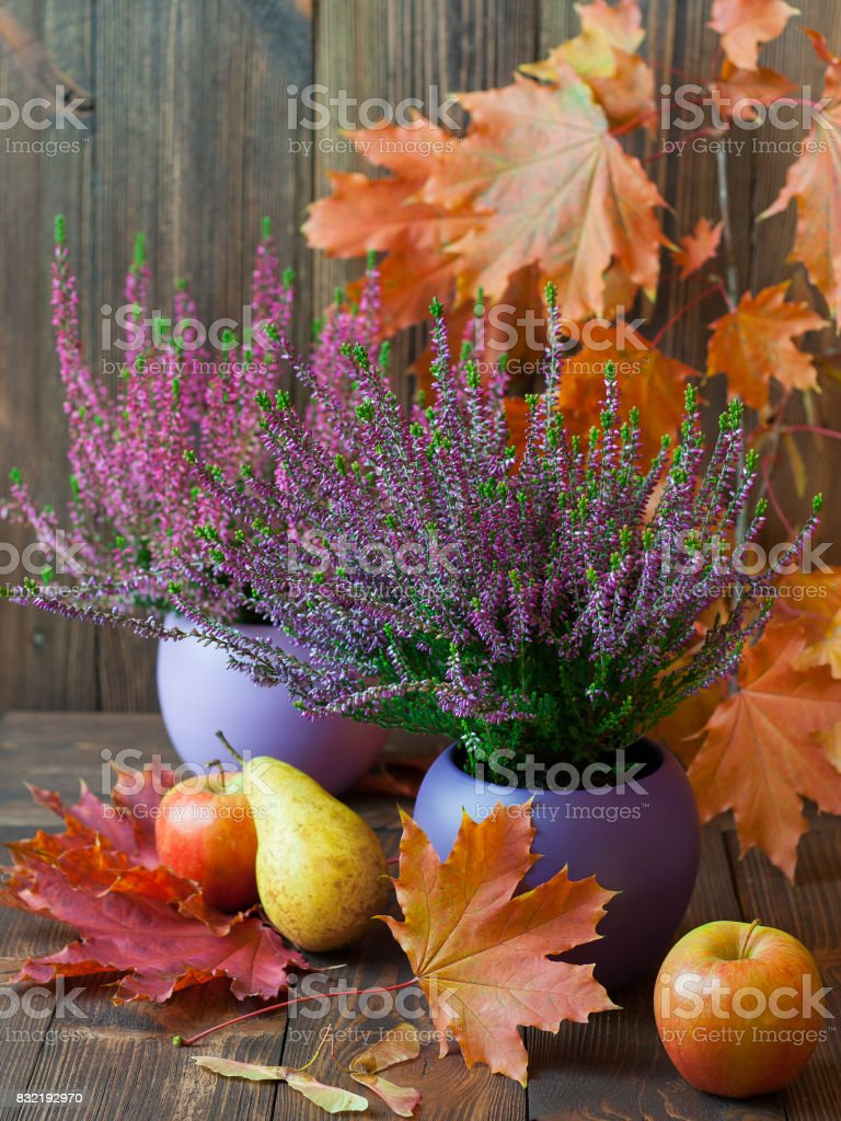 Blooming heather, colorful maple leaves and juicy fruits on a background of brown, wooden boards stock photo