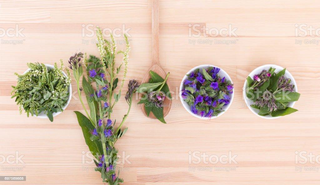 blooming herbs stock photo