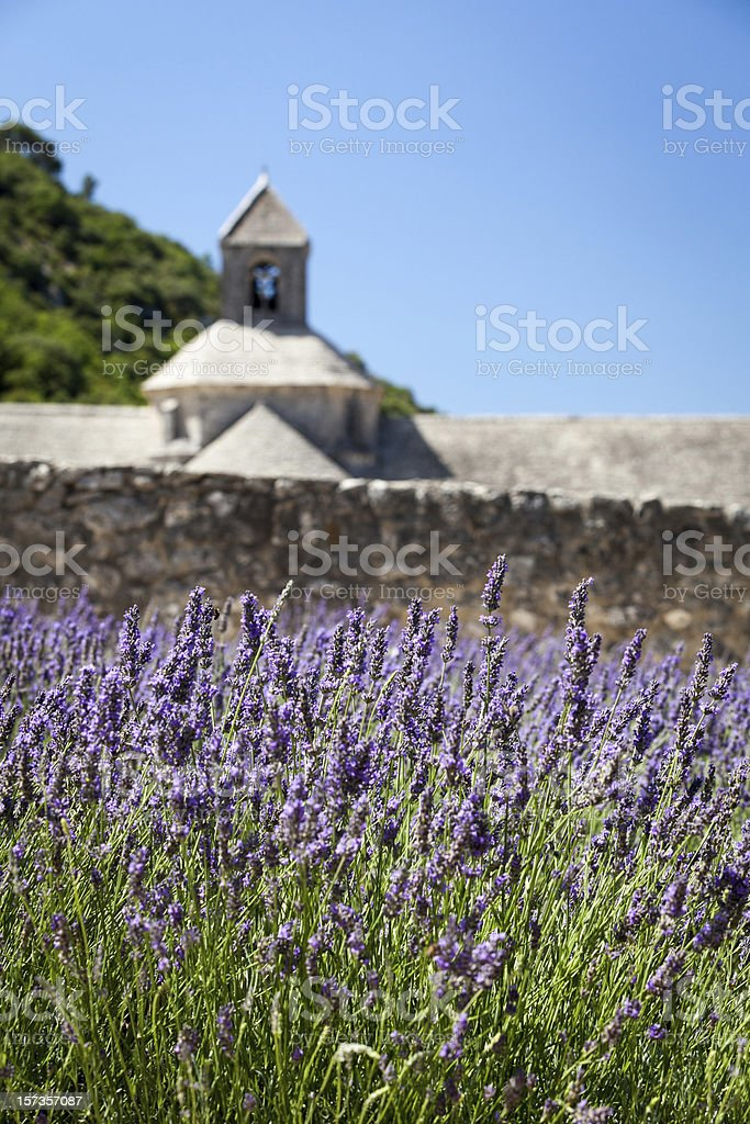 Blooming lavenders with Abbaye de Sénanque, Provence, France stock photo