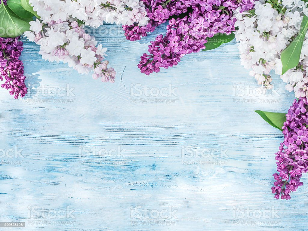 Blooming lilac flowers on the old wood. stock photo