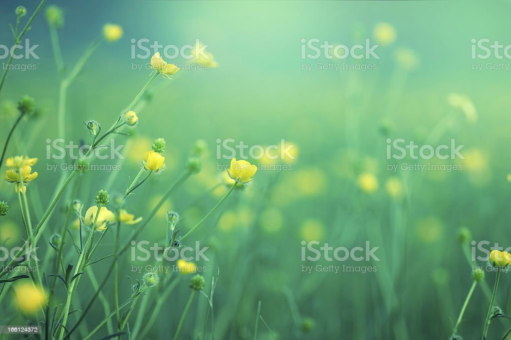 Blooming little flower royalty-free stock photo