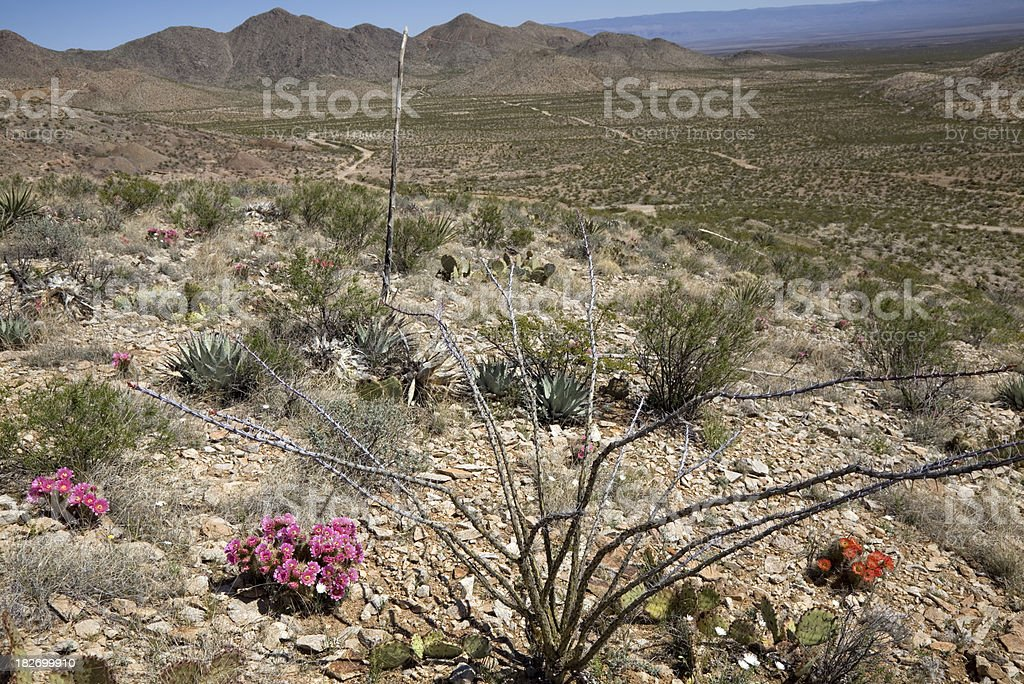 Blooming New Mexico Desert royalty-free stock photo