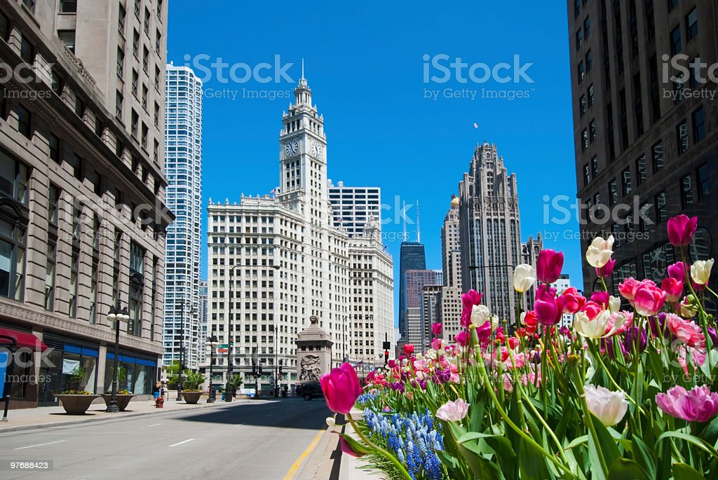 Blooming pink flowers and spring time in the city stock photo
