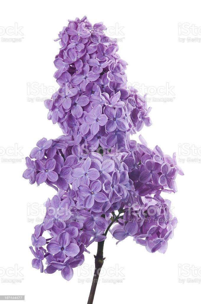 Заставки один цветок