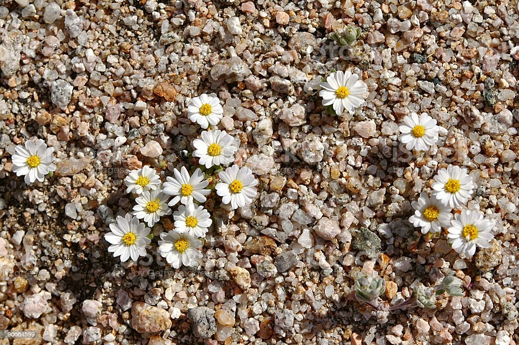 Blooming Sand royalty-free stock photo