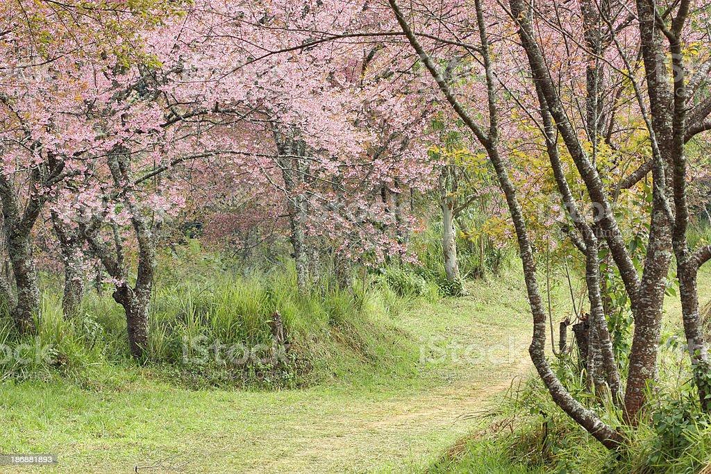 Blooming season royalty-free stock photo