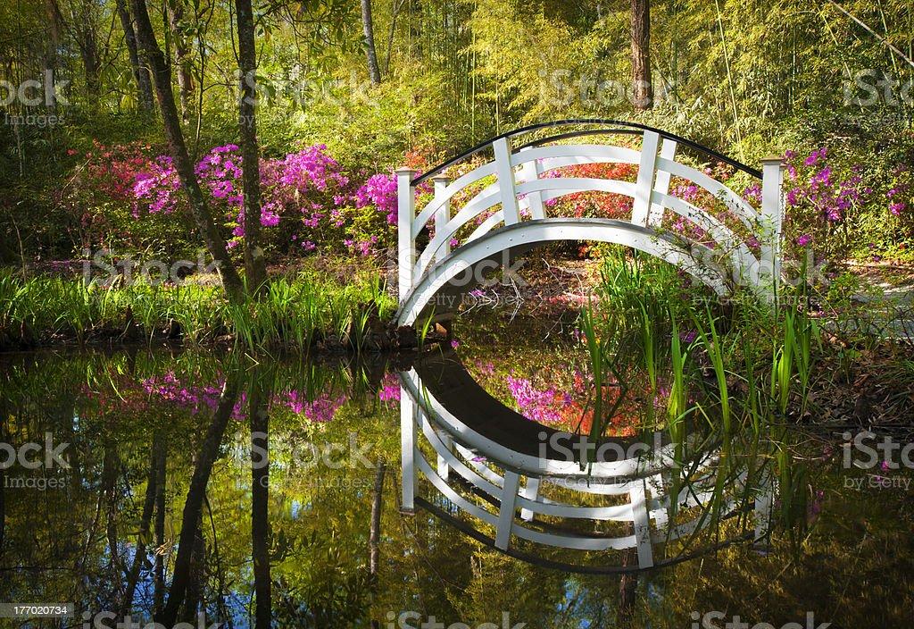 Blooming Spring Azalea Flowers Garden Nature Pond South Charleston SC stock photo