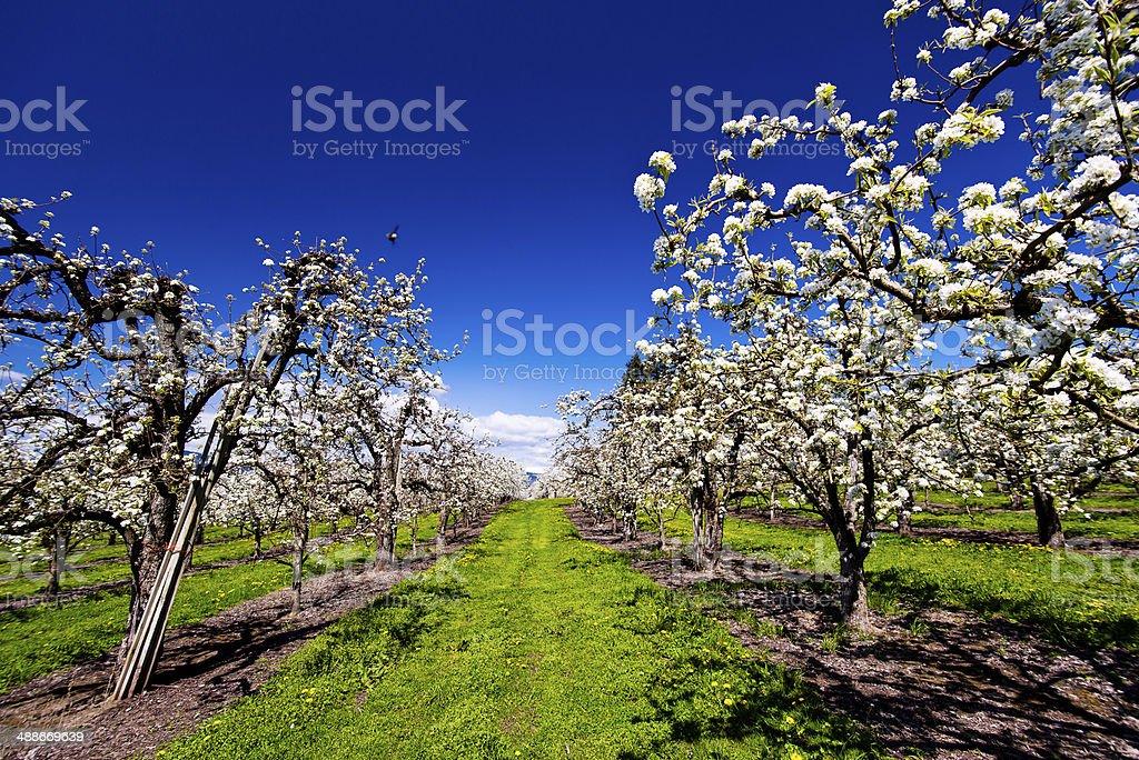 Giardino di fiore primavera foto stock royalty-free