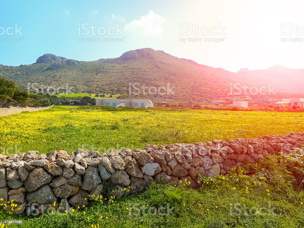 Blooming spring meadow on the island. Favignana, Sicily stock photo