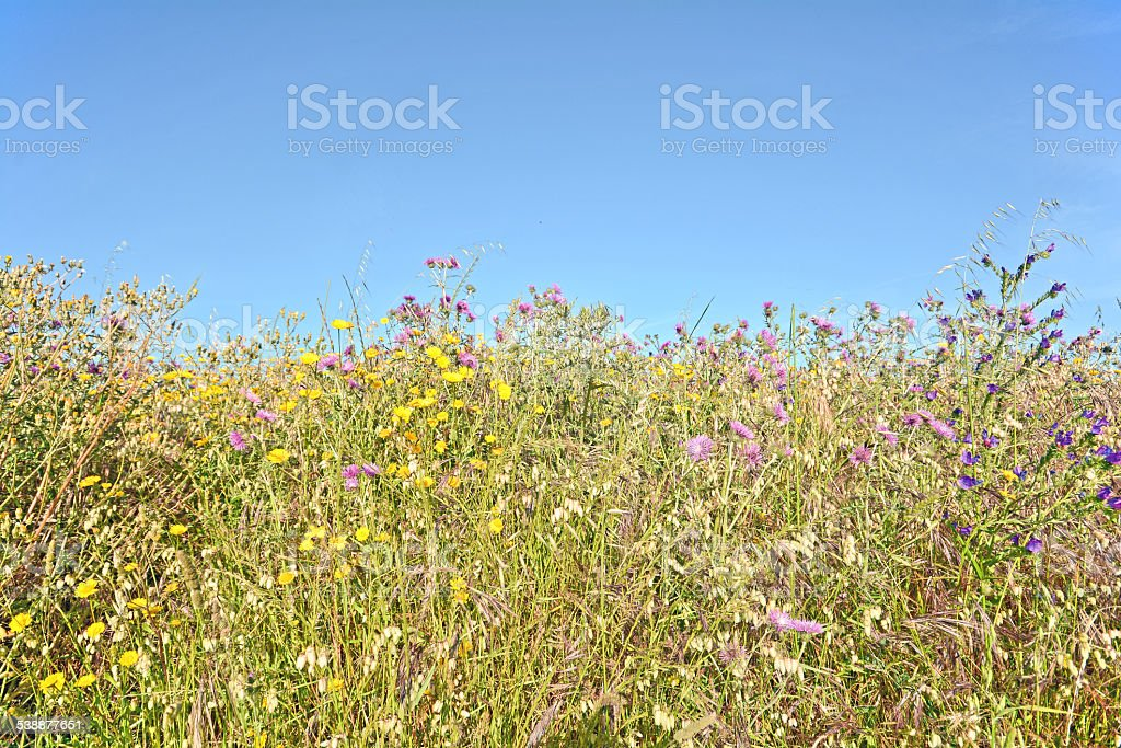 Blooming spring meadow with grasses and wildflowers, Allergy and Hayfever stock photo
