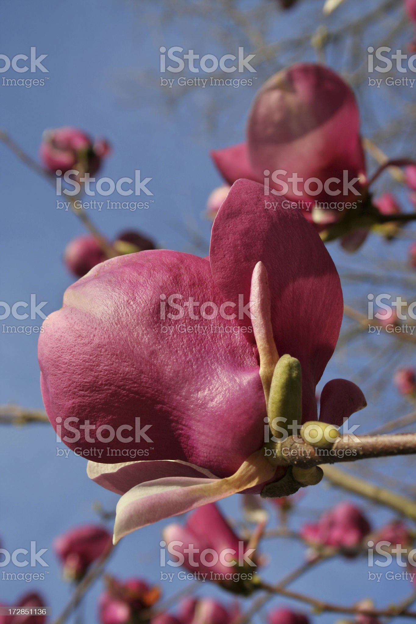 Blooming spring signs royalty-free stock photo