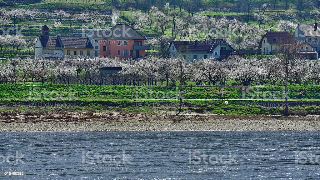 Blooming Time Lapse on river Danube stock photo