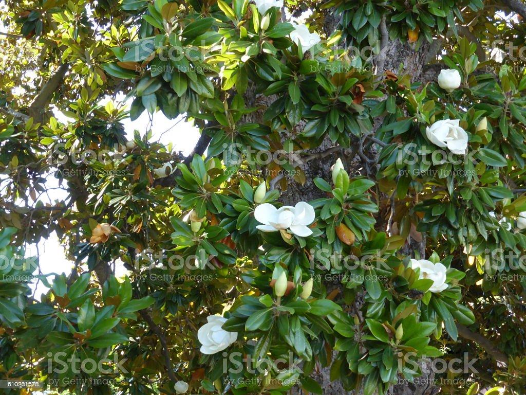 Hermosa escena de la naturaleza con el árbol floreciente y la llamarada del sol - imagen | Acciones de Adobe