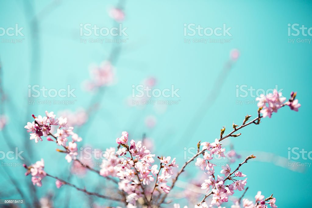 Blooming Tree stock photo