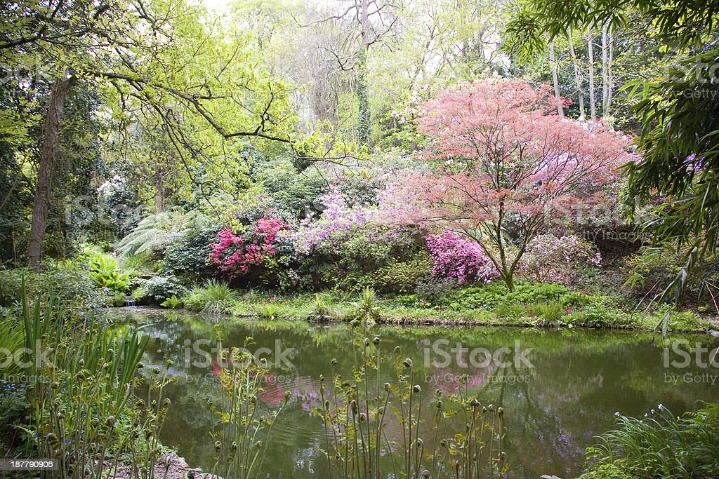 Blooming trees in the nature stock photo