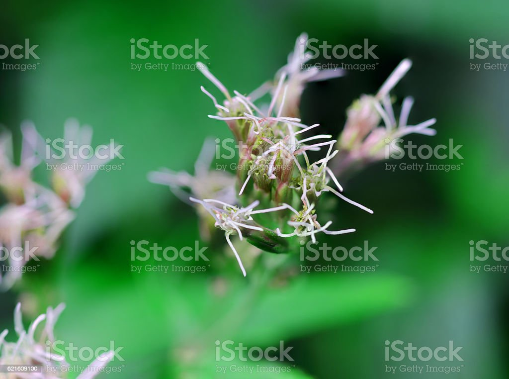 blooming wild flowers stock photo