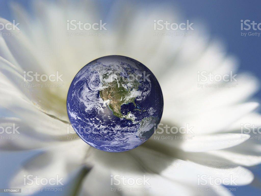 blooming world stock photo
