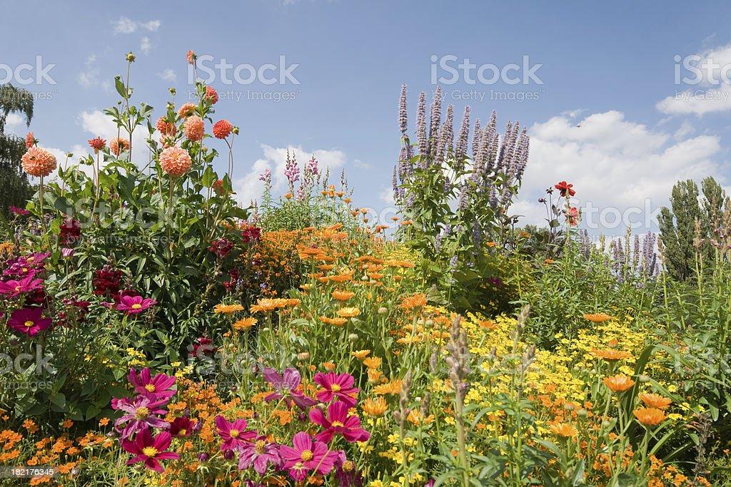 Bloomy garden royalty-free stock photo