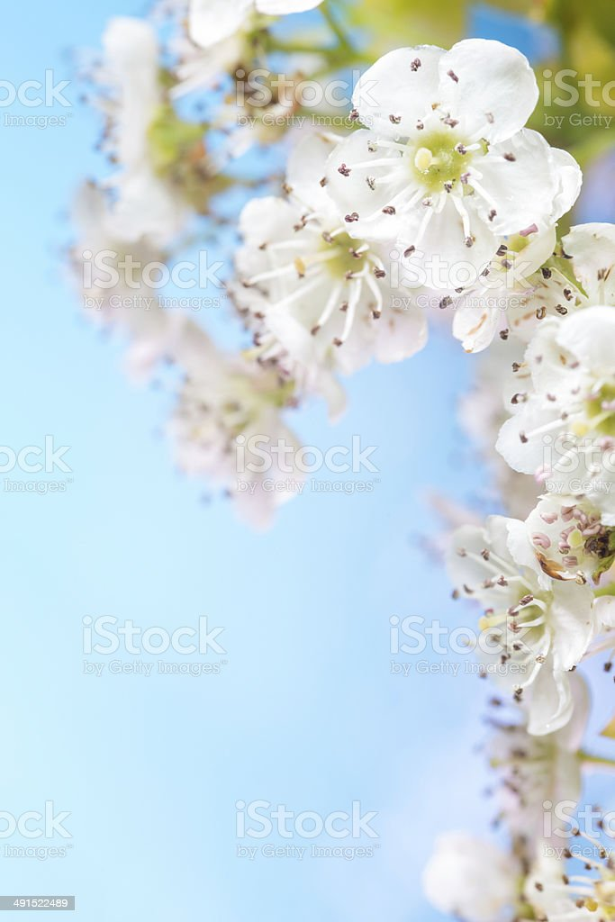 Blossom against a bright summer blue sky background royalty-free stock photo