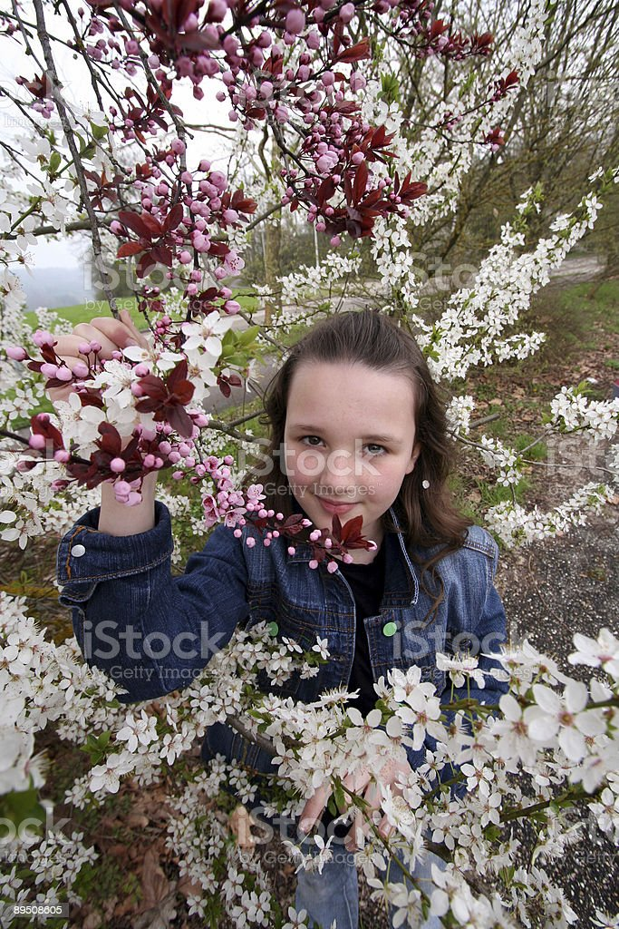 blossom and little girl royalty-free stock photo