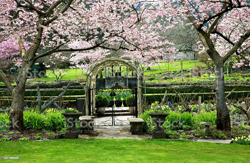 Blossom Arbour royalty-free stock photo