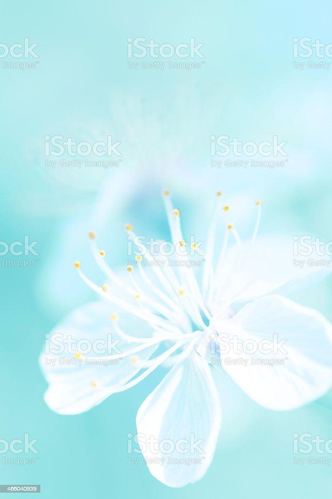 Blossom background royalty-free stock photo
