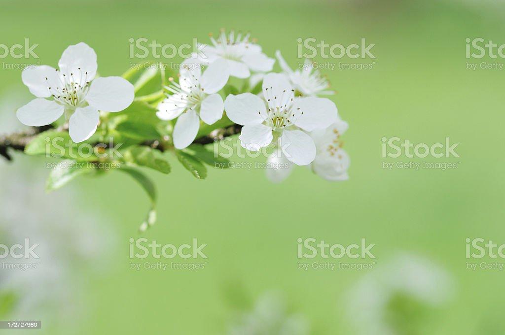 Blossom detail royalty-free stock photo