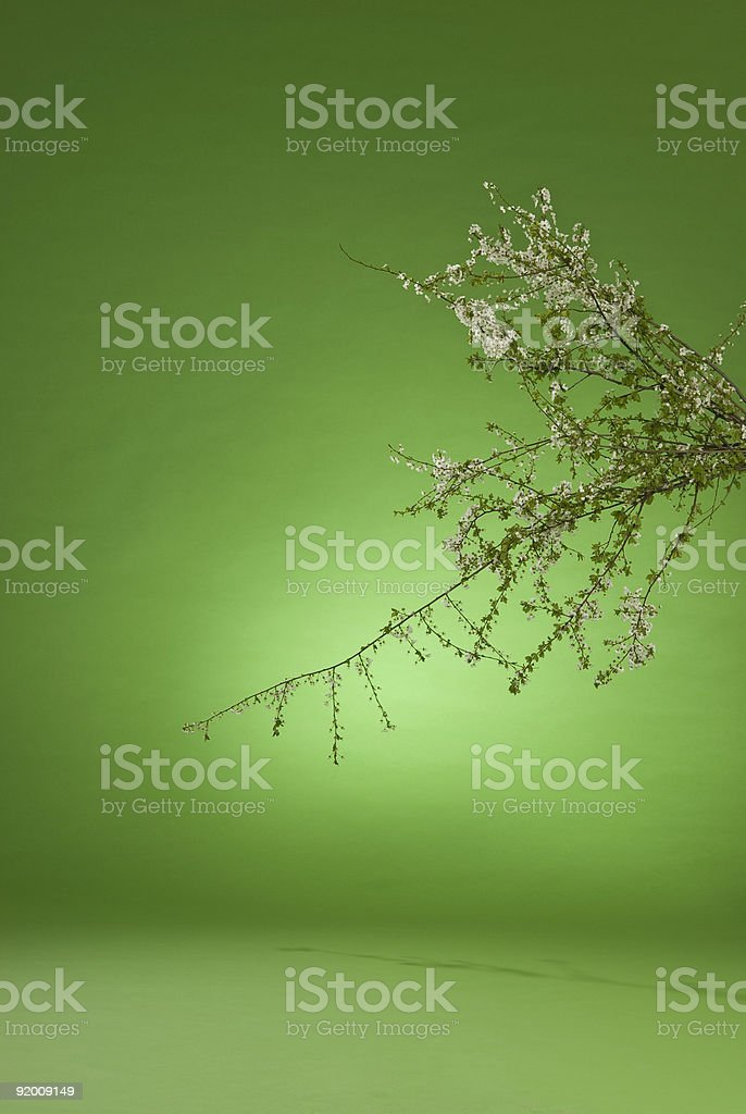 blossom front of green background royalty-free stock photo