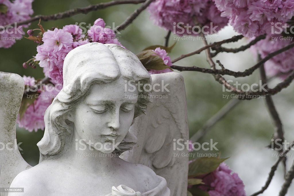 Angel in spring time with pink cherry blossom stock photo