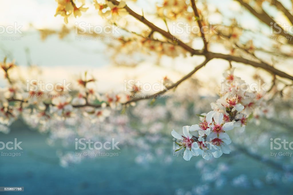 Blossom of tree stock photo