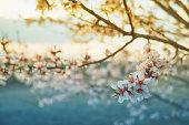Blossom of tree