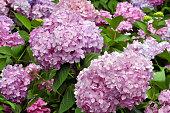 Blossom pink flowers