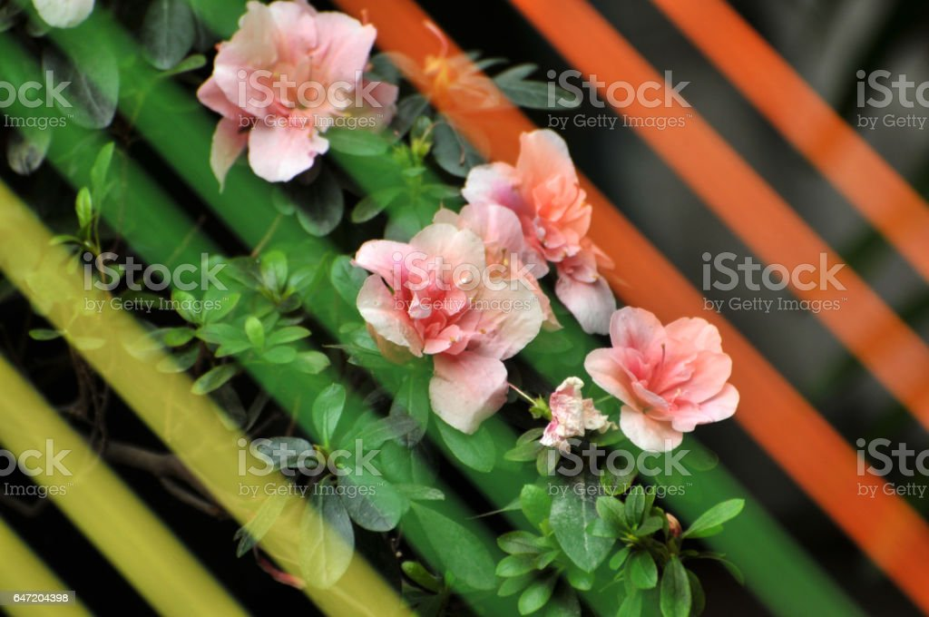Blossom pink flowers stock photo